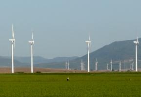 Jerez acoge un congreso que analizará el impacto de los parques eólicos en la fauna