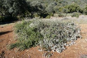 La Fundación Monte Mediterráneo mejora los majanos de los conejos