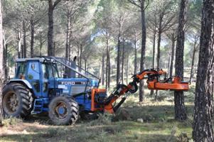Desarrollan un kit para la recogida automatizada y selectiva de piñas de pino piñonero