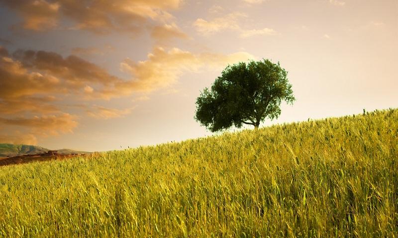La Fundación CTA entra en el consorcio que moviliza la bioeconomía europea