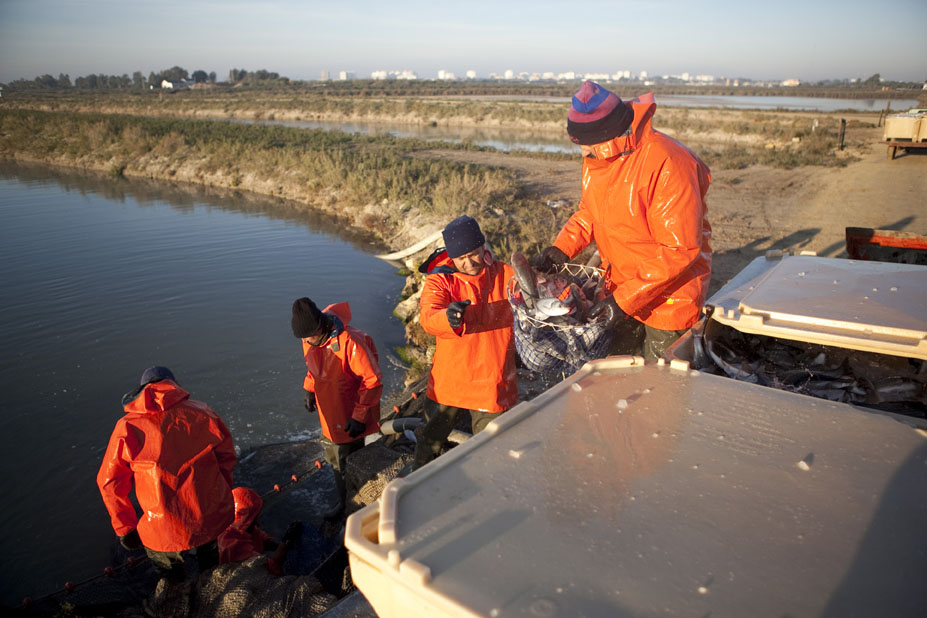 Expertos de MIMECCA, al que pertenece Ctaqua, determinan protocolos para la capacidad de carga de la acuicultura marina