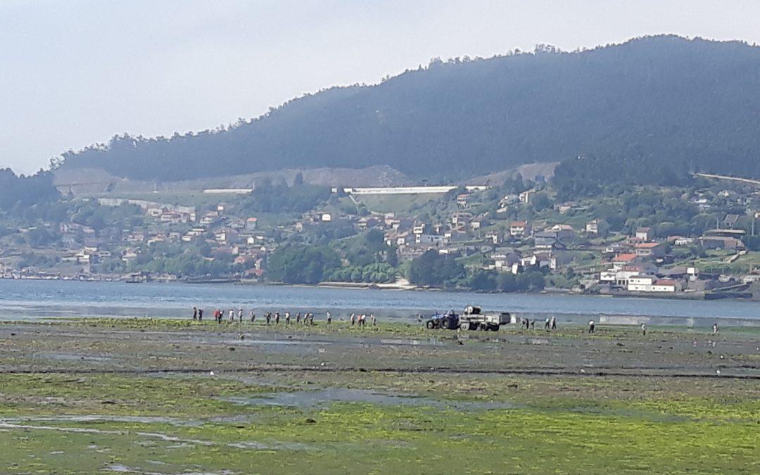 ANFACO-CECOPESCA y CTAQUA han cuantificado los residuos de algas generados en la actividad acuícola y trabajan en su valorización