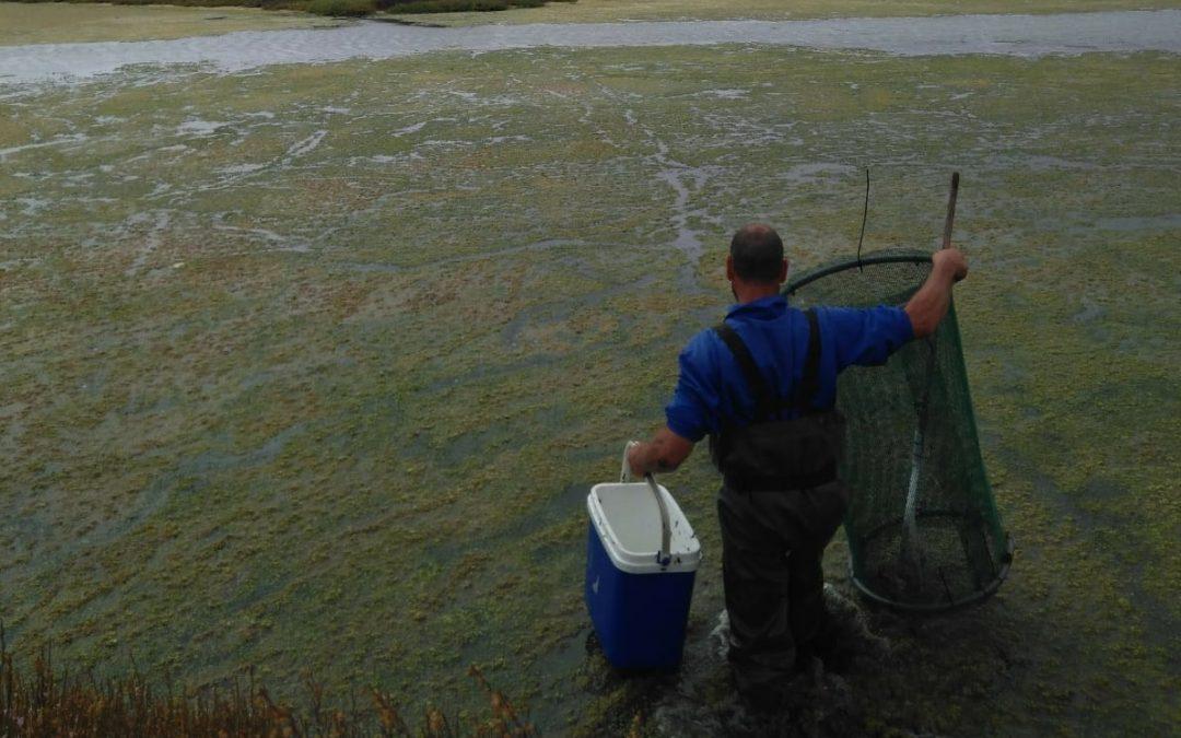 """ANFACO-CECOPESCA y CTAQUA presentan los resultados del proyecto """"Gestión y valorización de la biomasa de algas desechada en la actividad acuícola"""""""