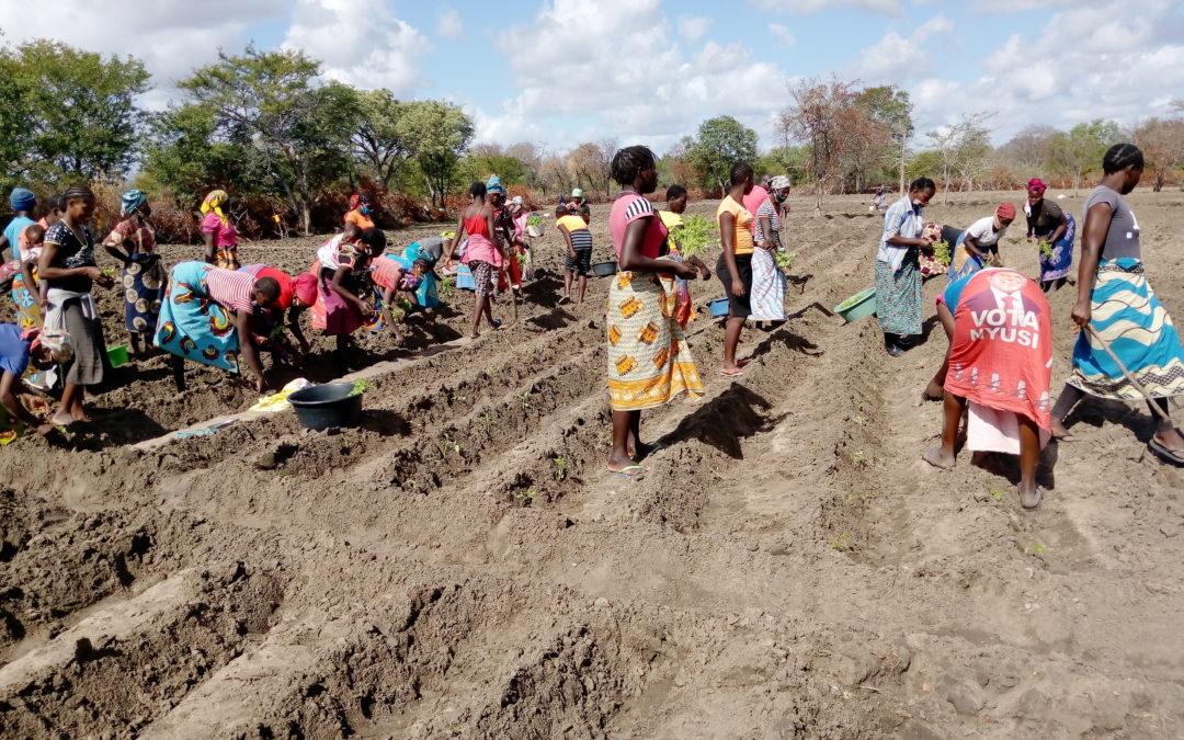 Madre Coraje y la AACID apoyan a dos distritos de Mozambique en materia de agua, alimentación y género
