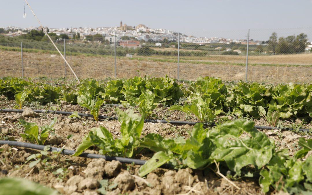 La apuesta por productos locales y ecológicos cerrará el ciclo de conferencias de agricultura sostenible de la FSU