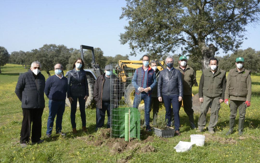 El Dehesafío inicia la campaña 2021 con la siembra de 800 encinas en Los Pedroches.