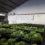Dos camiones semanales de frutas y hortalizas de las principales cooperativas españolas al Banco de Alimentos de Córdoba