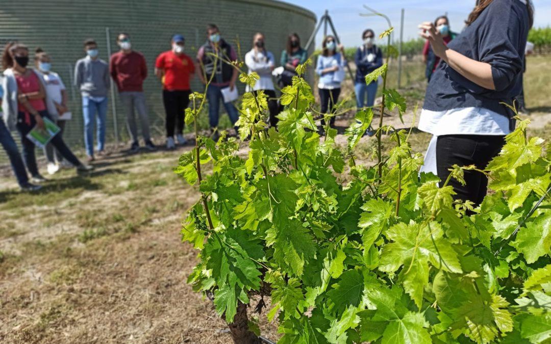 La FSU imparte un seminario sobre agricultura ecológica dirigido a jóvenes profesionales de la comarca