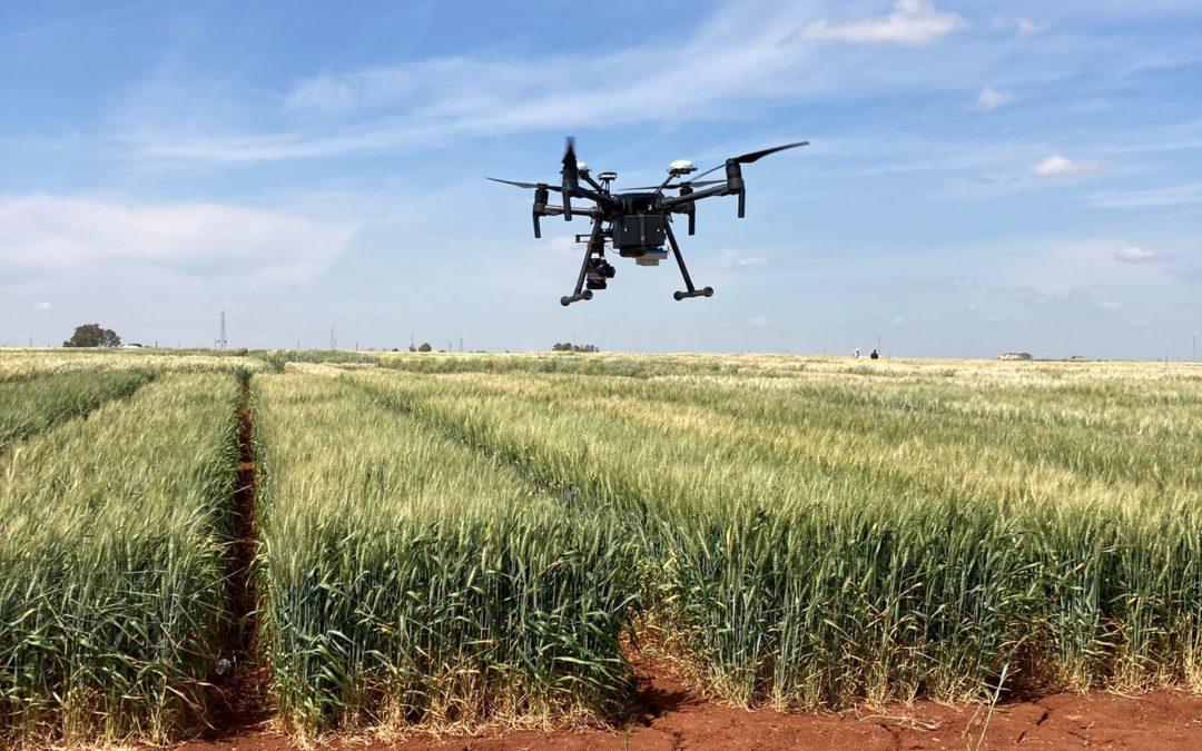 Agrosap y la US desarrollan una tecnología para reducir la contaminación por micotoxinas de alimentos procedentes de cebada y trigo.