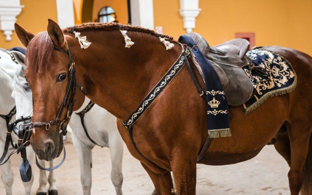 Reluxo, el caballo andaluz de 26 años que ha recorrido medio mundo